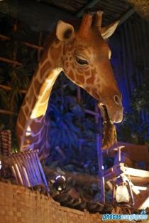 La Girafe Curieuse